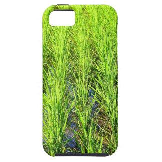 緑豊かな緑の水田分野バリ島- iPhone 5の場合 iPhone SE/5/5s ケース
