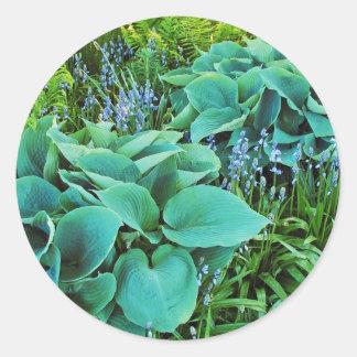 緑豊かな緑のhostAおよびシダの植物の庭 ラウンドシール
