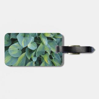緑豊かな緑のhostAの植物の葉 ラゲッジタグ