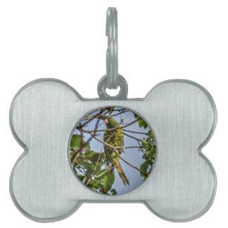 緑LORIKEET田園クイーンズランドオーストラリア ペットネームタグ