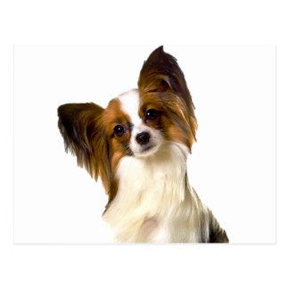 編集可能背景Pilで隔離されるPapillonの子犬 ポストカード