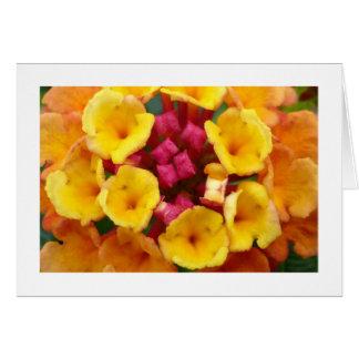 縁どられるLantanaの花II - カード