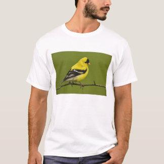 繁殖の羽のオスのアメリカのGoldfinch、 Tシャツ