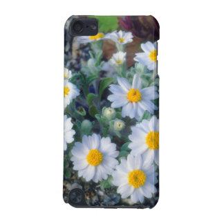 羊毛質デイジーの野生の花 iPod TOUCH 5G ケース