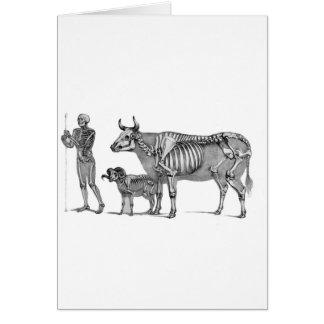 羊飼い-骨組ウシおよびヤギ カード