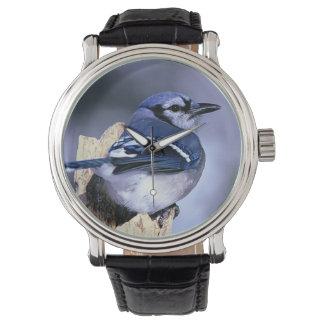 美しいアオカケス 腕時計