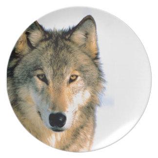 美しいオオカミの写真乾板 プレート