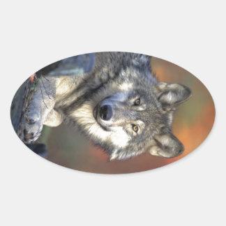 美しいオオカミ 楕円形シール
