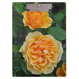 美しいオレンジバラ クリップボード