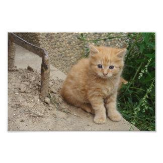 美しいオレンジ虎猫の子ネコ フォトプリント