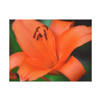 美しいオレンジLillyの花の写真 キャンバスプリント