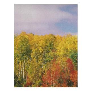 美しいカナダの秋季: 低価格のギフト ポストカード