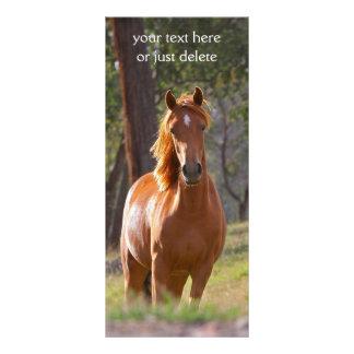 美しいクリの馬の写真のしおり フルカラーラックカード