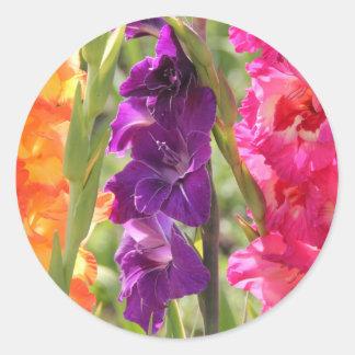 美しいグラジオラスの開花 ラウンドシール