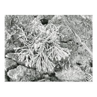 美しいコラリンの藻の挨拶状 ポストカード