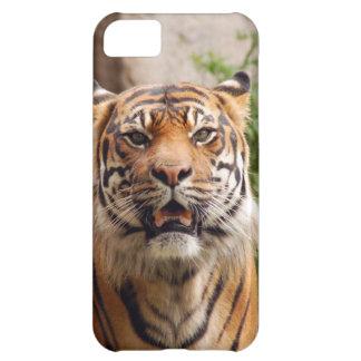 美しいトラの顔のプリント iPhone5Cケース
