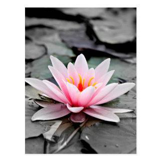 美しいピンクのはすの花の《植物》スイレンの禅の芸術 ポストカード