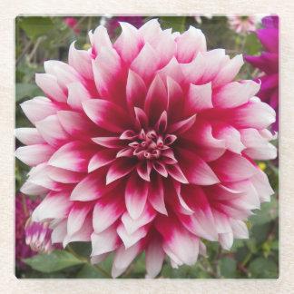 美しいピンクのダリアの花柄 ガラスコースター