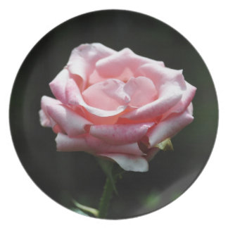 美しいピンクのバラのクローズアップ プレート