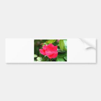 美しいピンクのバラの友情カード バンパーステッカー