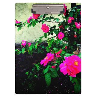 美しいピンクのバラ クリップボード