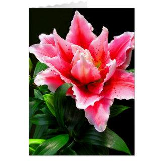 美しいピンクユリ カード