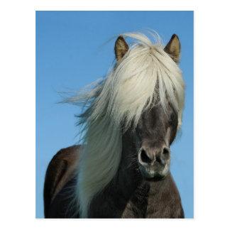 美しいフィヨルドの子馬の馬の種馬 ポストカード