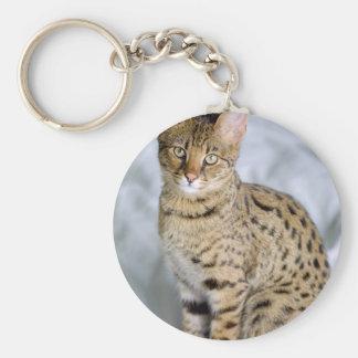 美しいベンガルかわいい猫の顔 キーホルダー