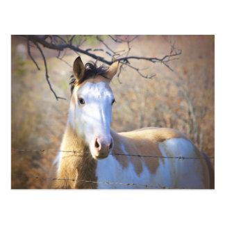 美しいペンキの馬の郵便はがき ポストカード