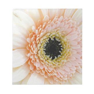 美しいモモまたはクリームのガーベラ ノートパッド