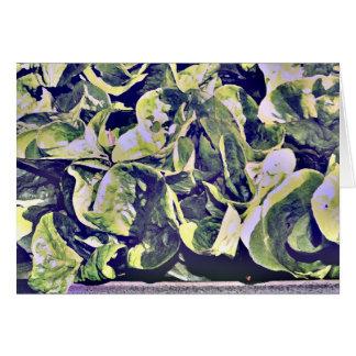 美しいレタス カード
