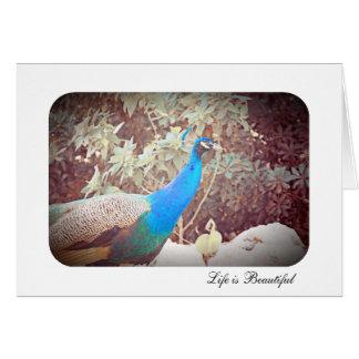 美しいレトロの孔雀 カード