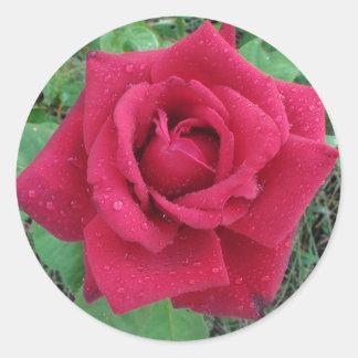 美しい写真雨滴のステッカーを持つ赤いバラ ラウンドシール