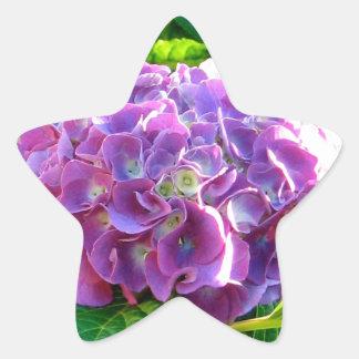 美しい単独紫色のアジサイの花 星シール