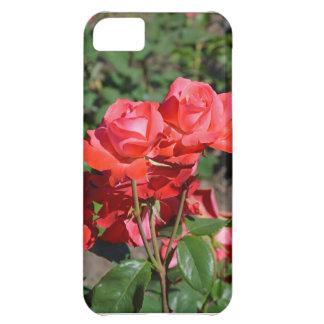 美しい咲くバラのプリント iPhone5Cケース