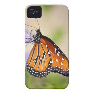 美しい女王の蝶 Case-Mate iPhone 4 ケース