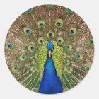 美しい孔雀および尾羽のプリント ラウンドシール