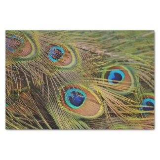 美しい孔雀の羽 薄葉紙