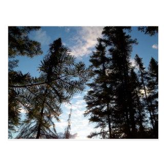 美しい松の木 ポストカード