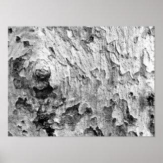 美しい樹皮の写真撮影 ポスター