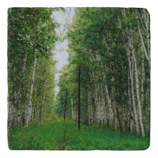 美しい樺の木の森林芸術 トリベット