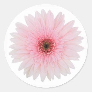 美しい淡いピンクのガーベラのデイジーの花 ラウンドシール