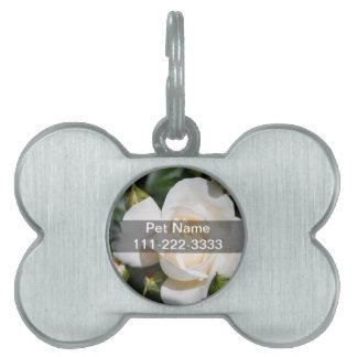 美しい白いバラの花。 ラブロマンスもの ペットネームタグ