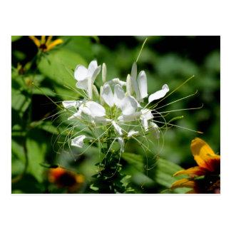 美しい白い花 ポストカード