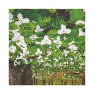 美しい白い花: ロマンチックで官能的な低価格 キャンバスプリント