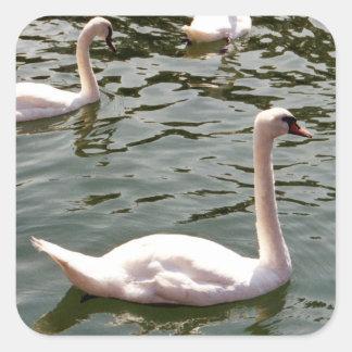 美しい白鳥 スクエアシール
