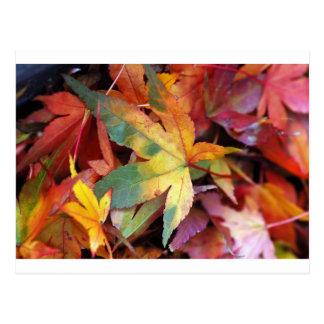 美しい紅葉のプリント ポストカード