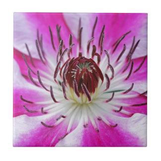 美しい紫色クレマチスの花 タイル