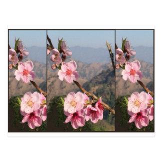 美しい花のインドUttraKHANDのフルーツのプランテーション ポストカード