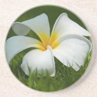 美しい花のクローズアップ-コースター コースター
